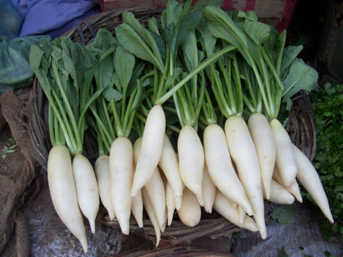 Health, medicinal and nutritional benefits of Radish and Radish leaves