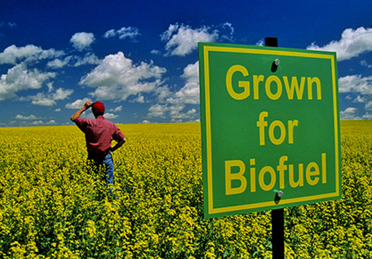 Can Biofuels Replace Fossil Fuels?