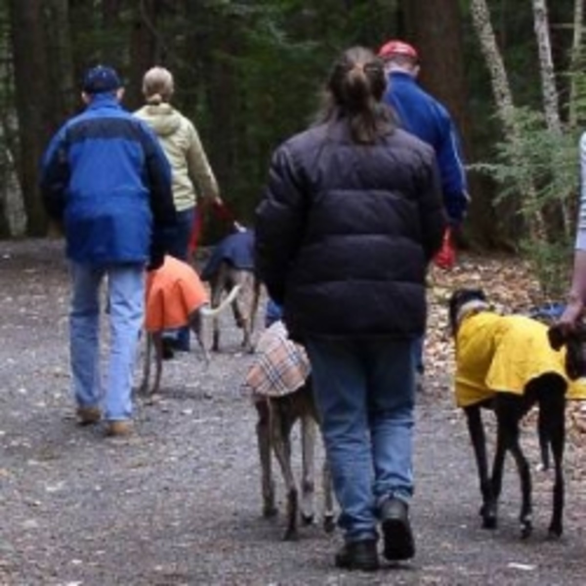 Winter Coats for Greyhound Dogs