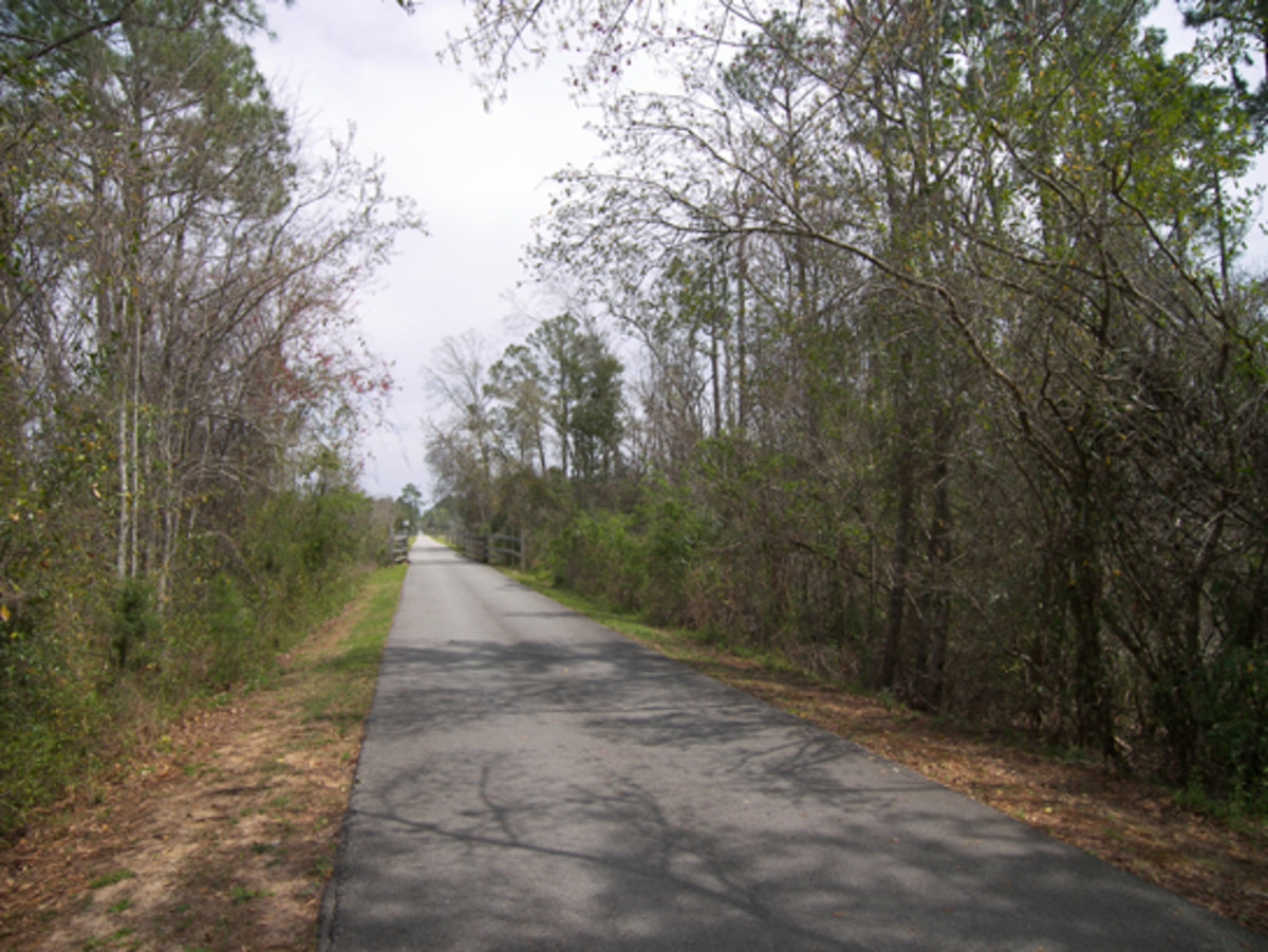 Blackwater Heritage State Trail In Milton Florida