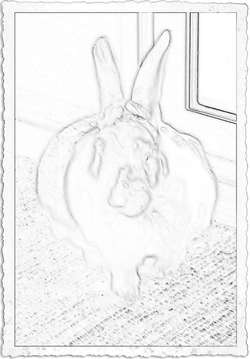 Coloring page created with Paint Shop Pro. Original photo was black and white.