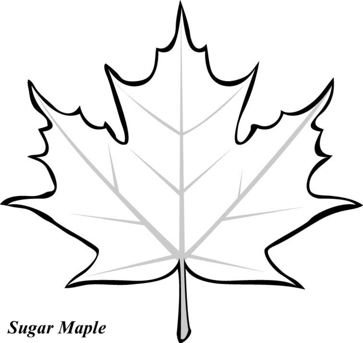 printable leaves coloring pages - photo#28