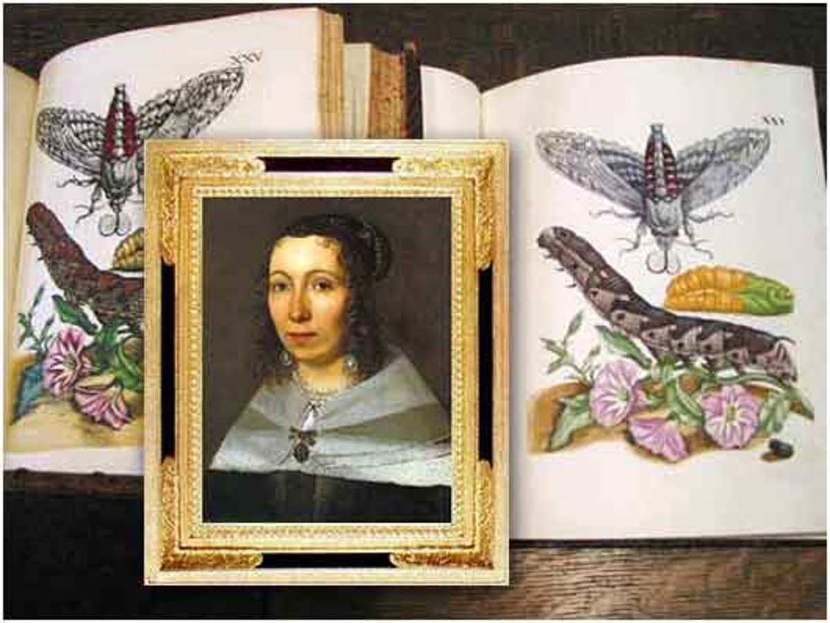 Maria Sibylla Merian, the Lady of the blue butterflies (and other beauties)