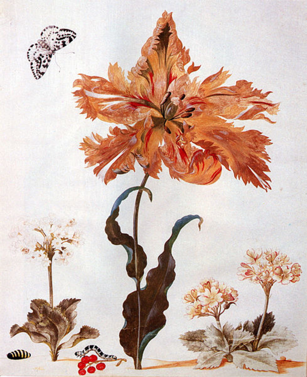 Subject: A Parrot Tulip, Auriculas, and Red Currants, with a Magpie Moth, its Caterpillar and Pupa