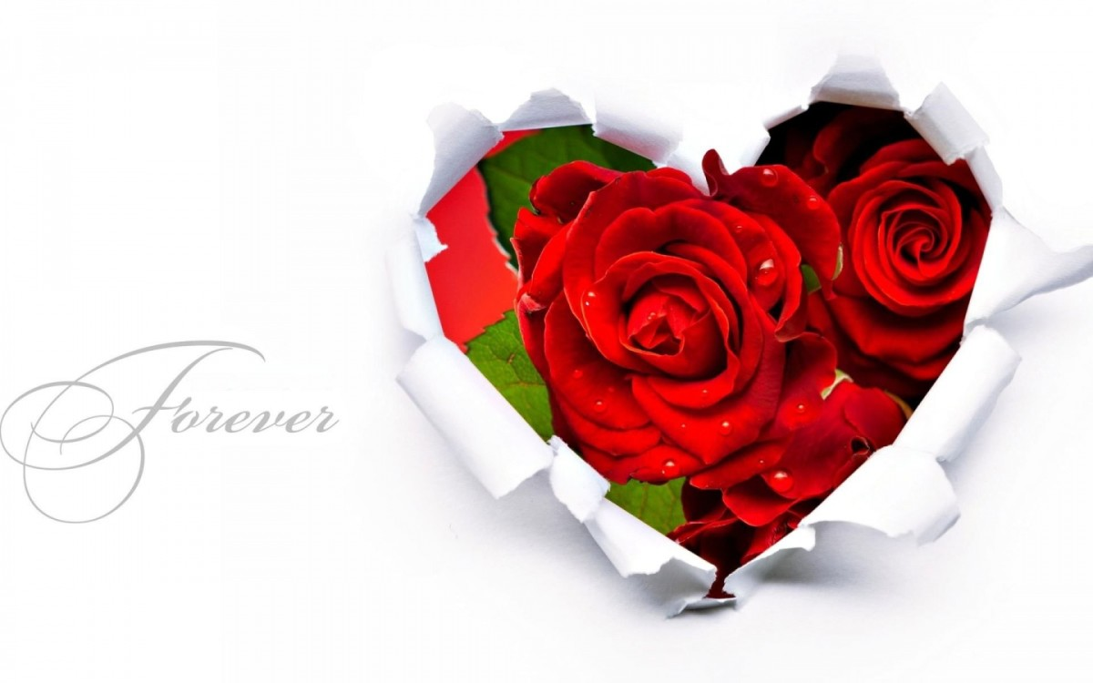 20-different-flowers-to-give-to-your-loved-one