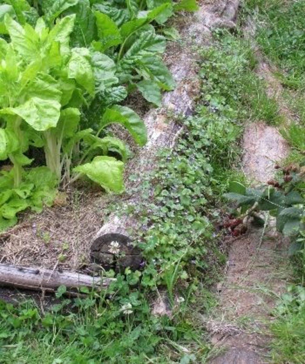 logs as garden edging
