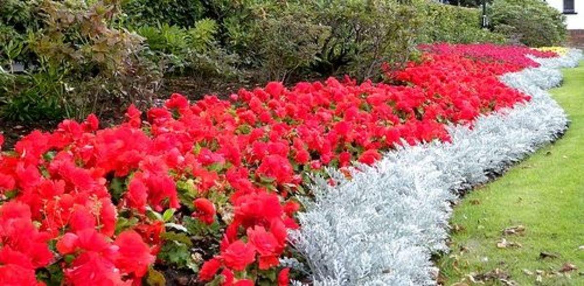 flowers as garden borders