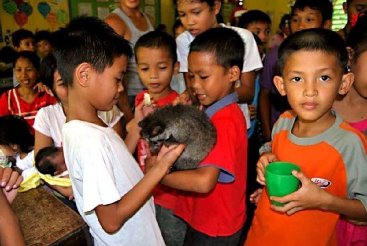 our-rescued-asian-palm-civet