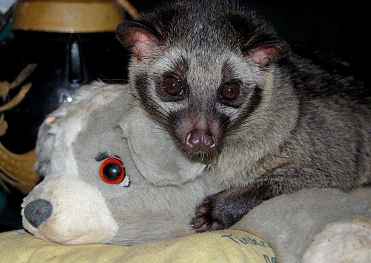 One of Bindi's favorite stuffed animals.