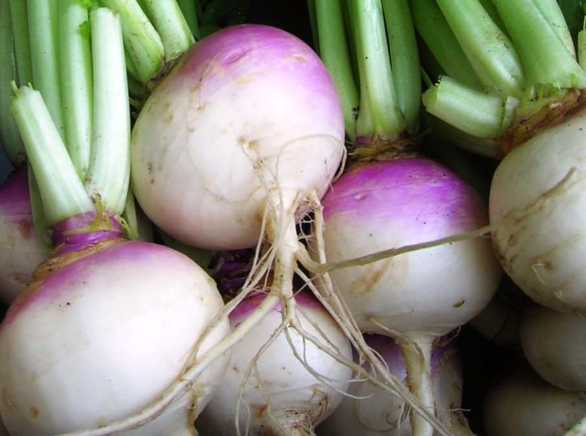 Health Benefits Of Raw Turnips.