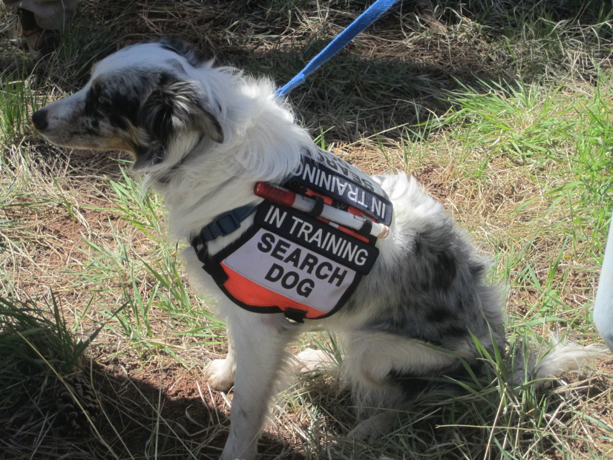 search-and-rescue-dog-backer