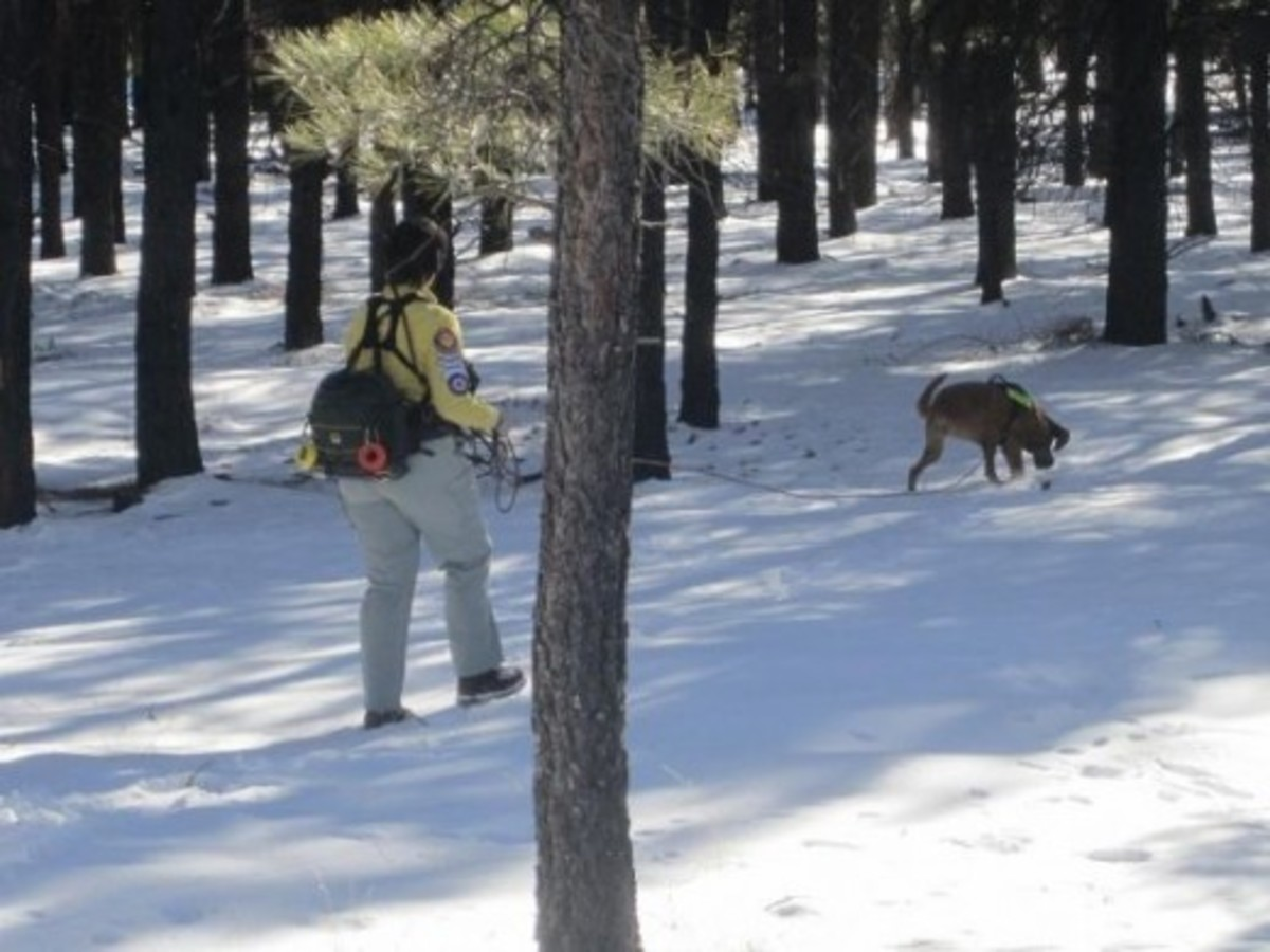 A K9 handler with her tracking/trailing dog - Coconino County Search & Rescue
