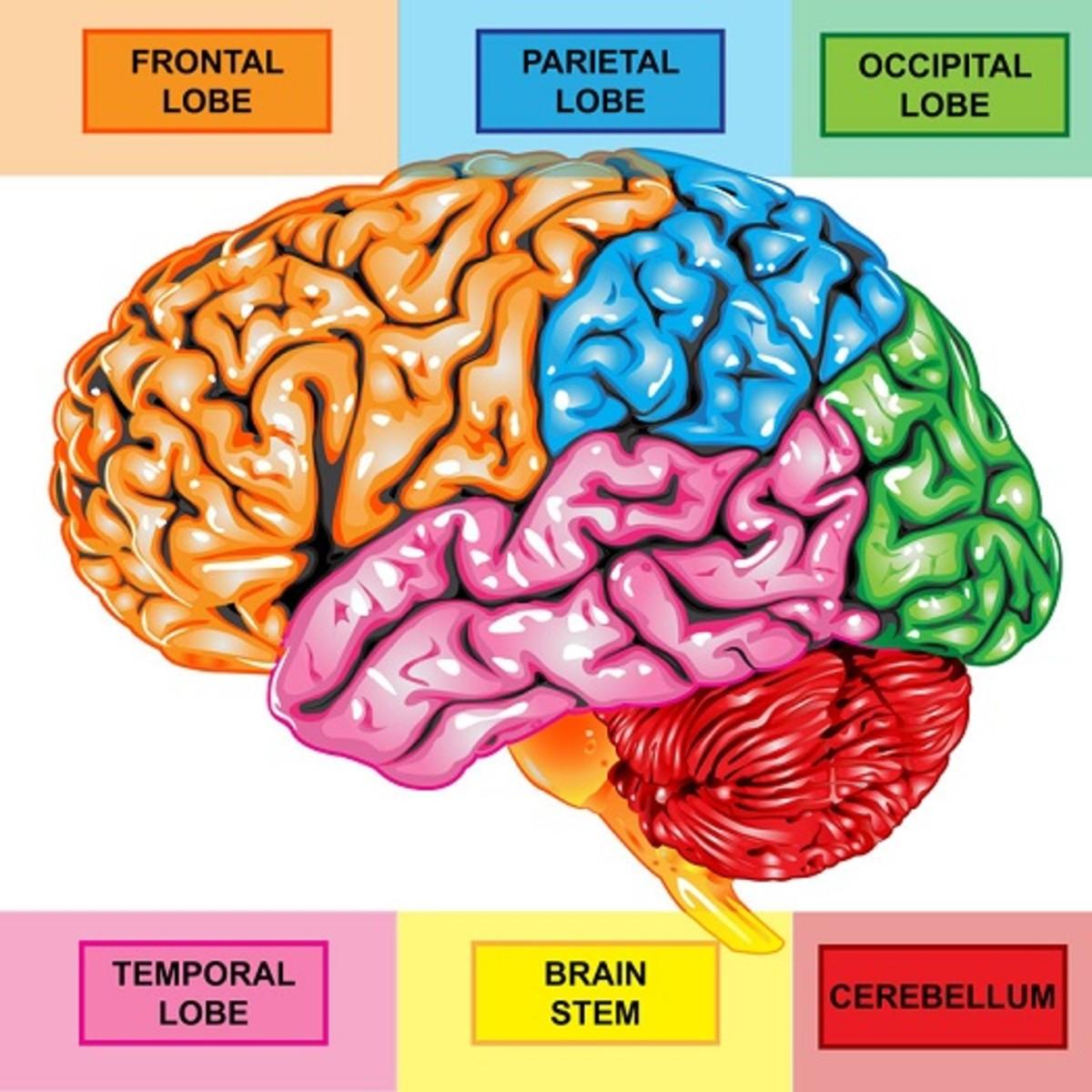 understanding-dr-daniel-amens-6-types-of-add