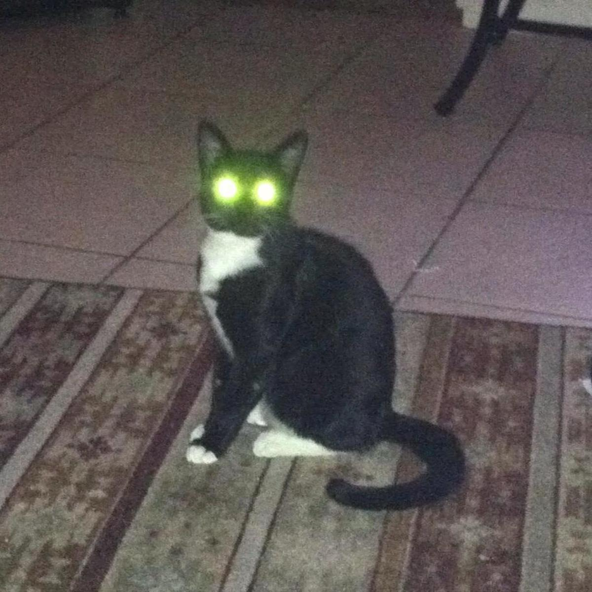 A cat spirit?