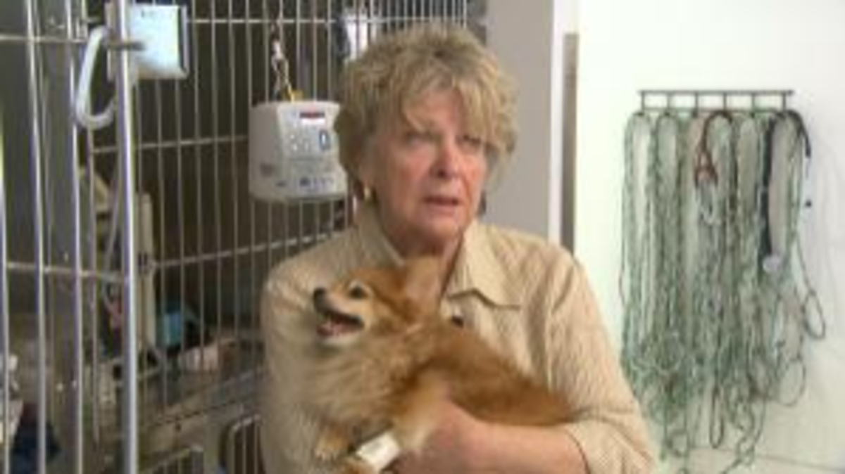 Caught without pet insurance, Molly's owner had to choose between letting Molly live or going into debt.