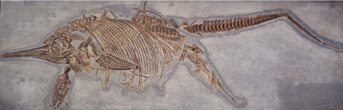 Ichthyosaurus giving birth.