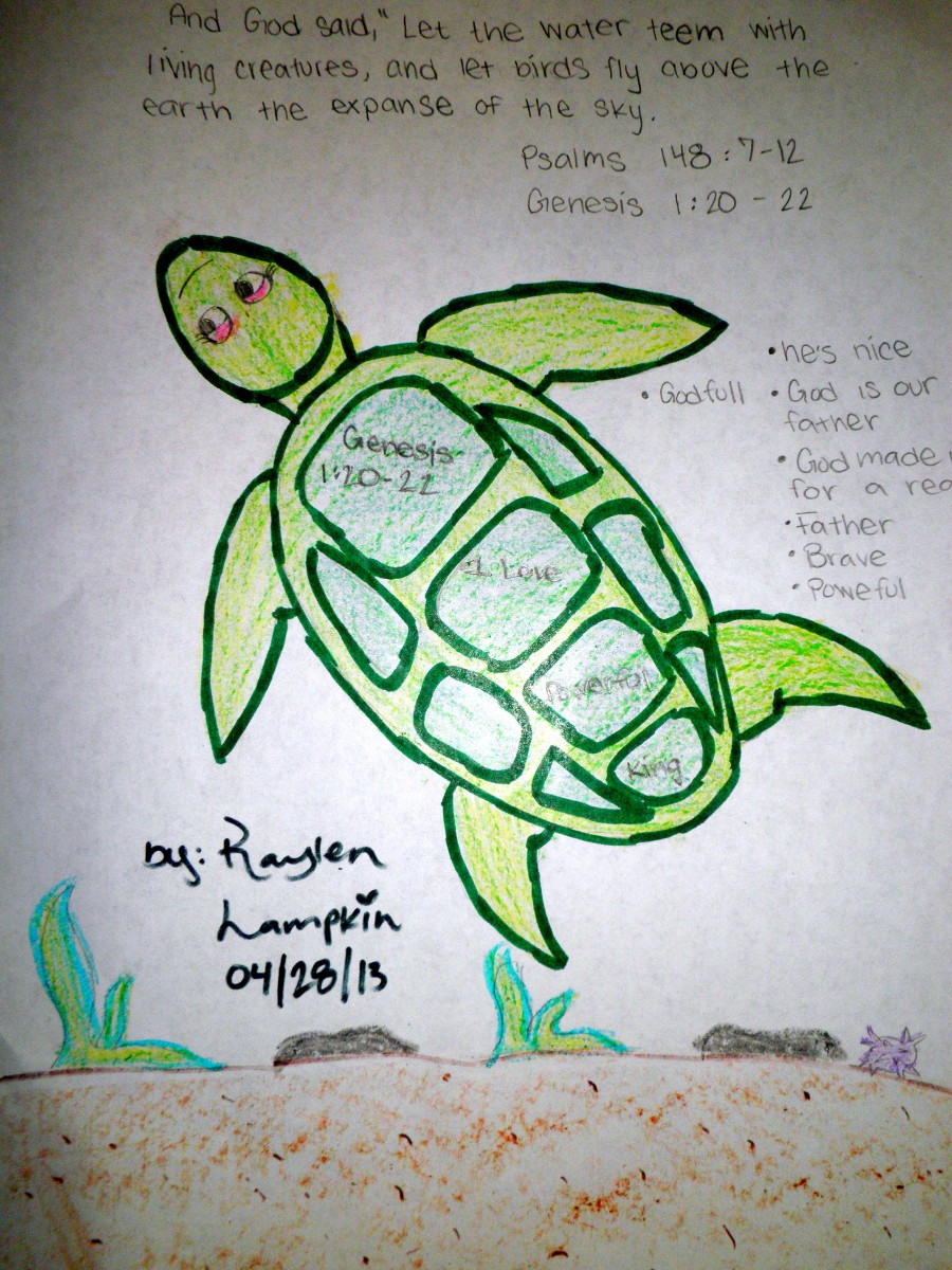 Kids Sunday School Bible Art Lesson: Sea Turtle Animal