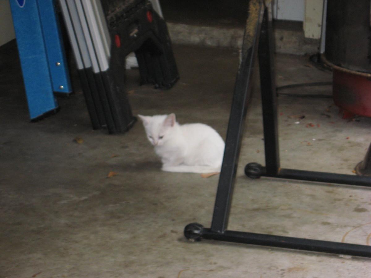 feral kitty