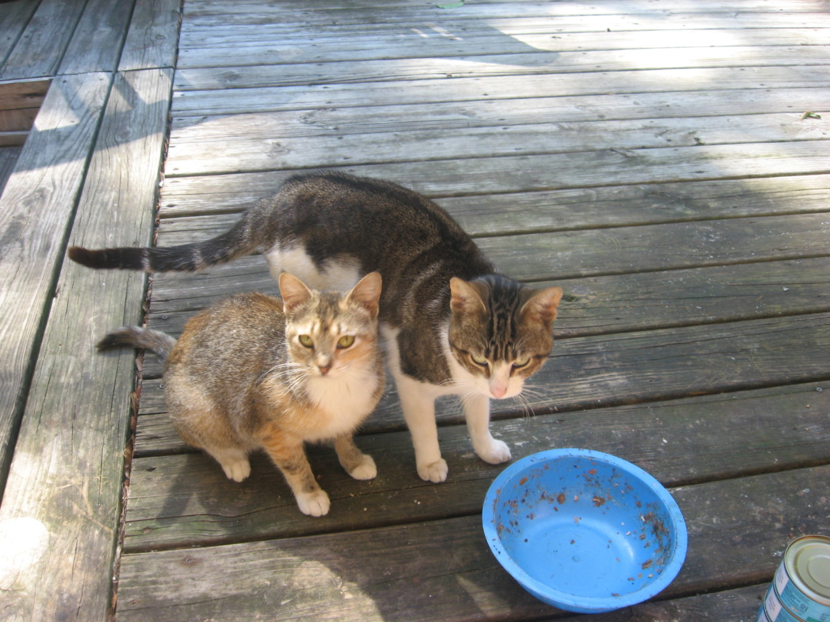 Cat Rescue - on our deck