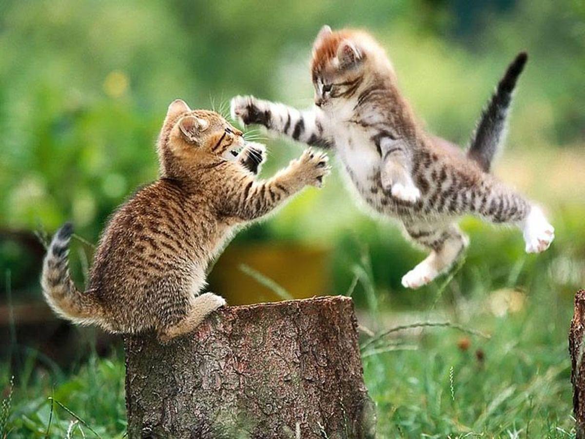 Now I try ze flying ninja leap!