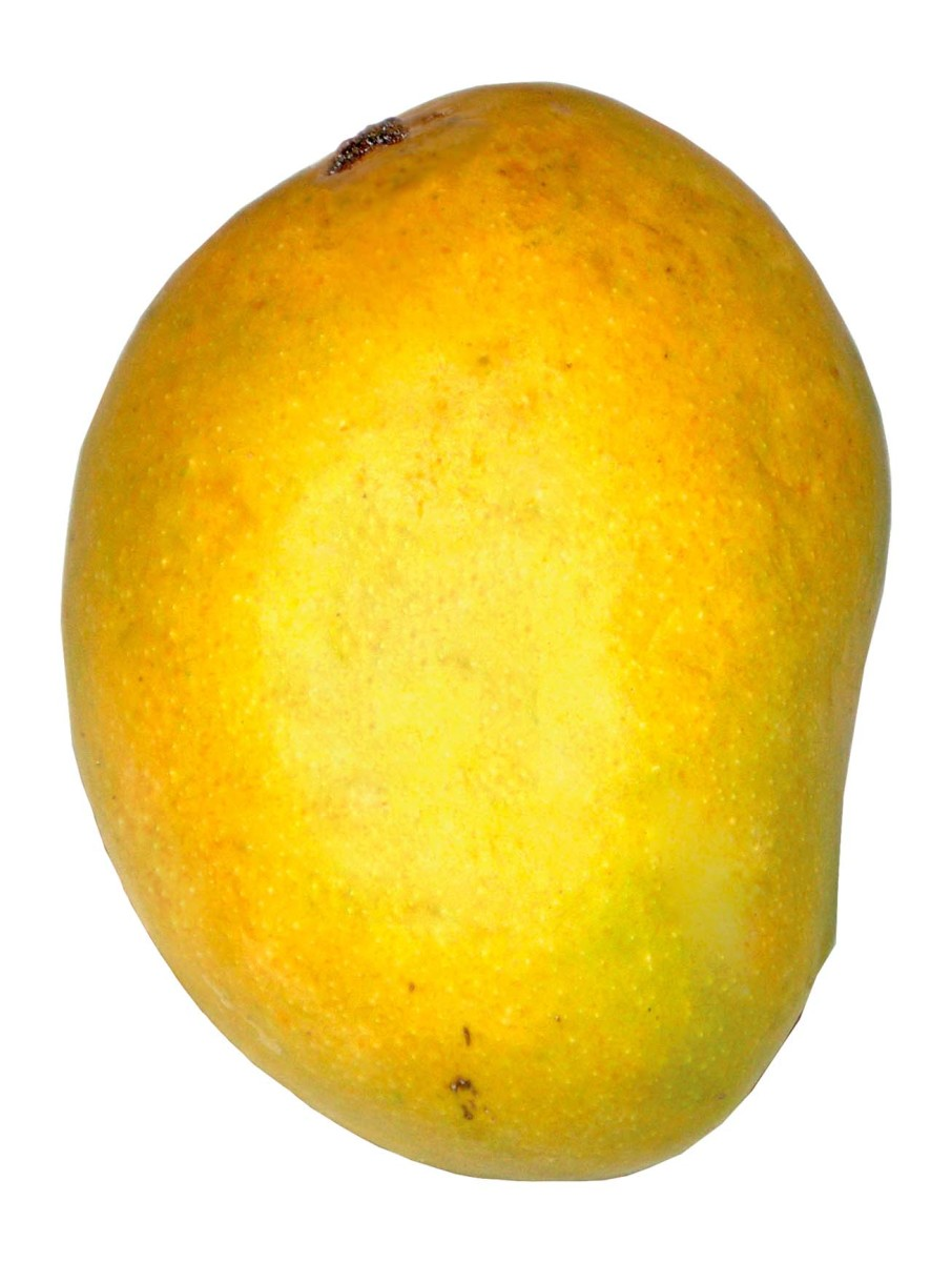 Picture of a mango - a delicious fruit
