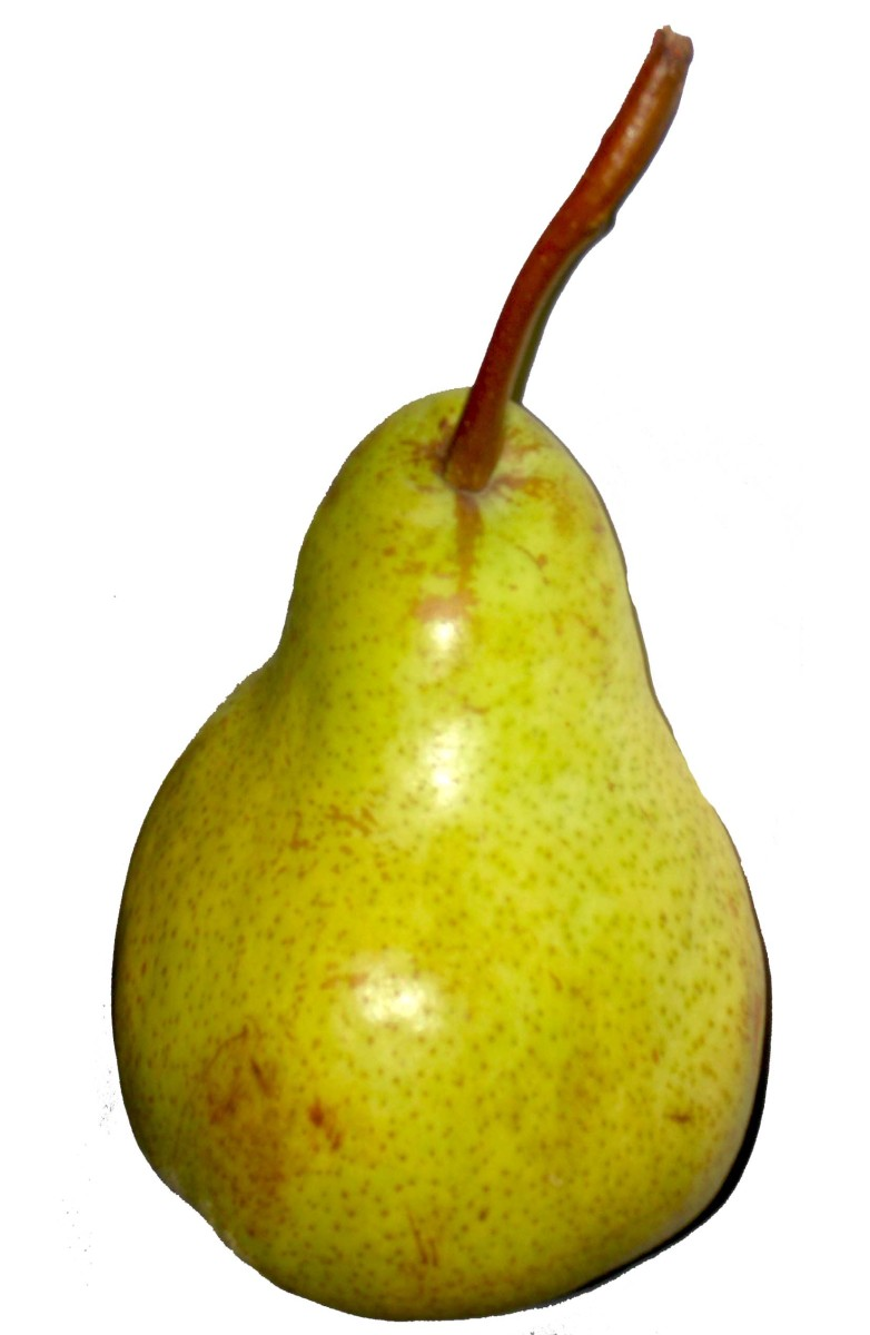 Pears are bell shaped