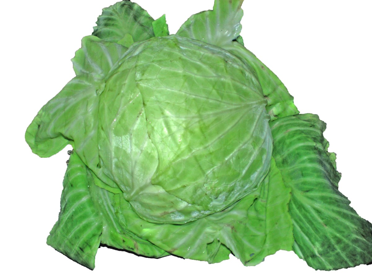 Picture of a cabbage