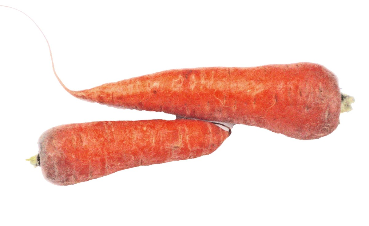 Picture of carrots
