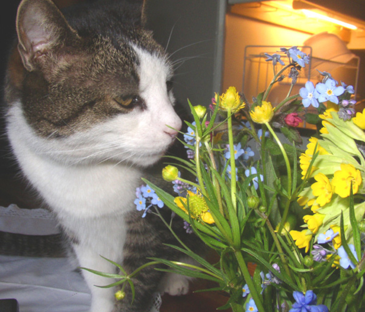 how-to-get-rid-of-cat-urine-smell-in-the-house