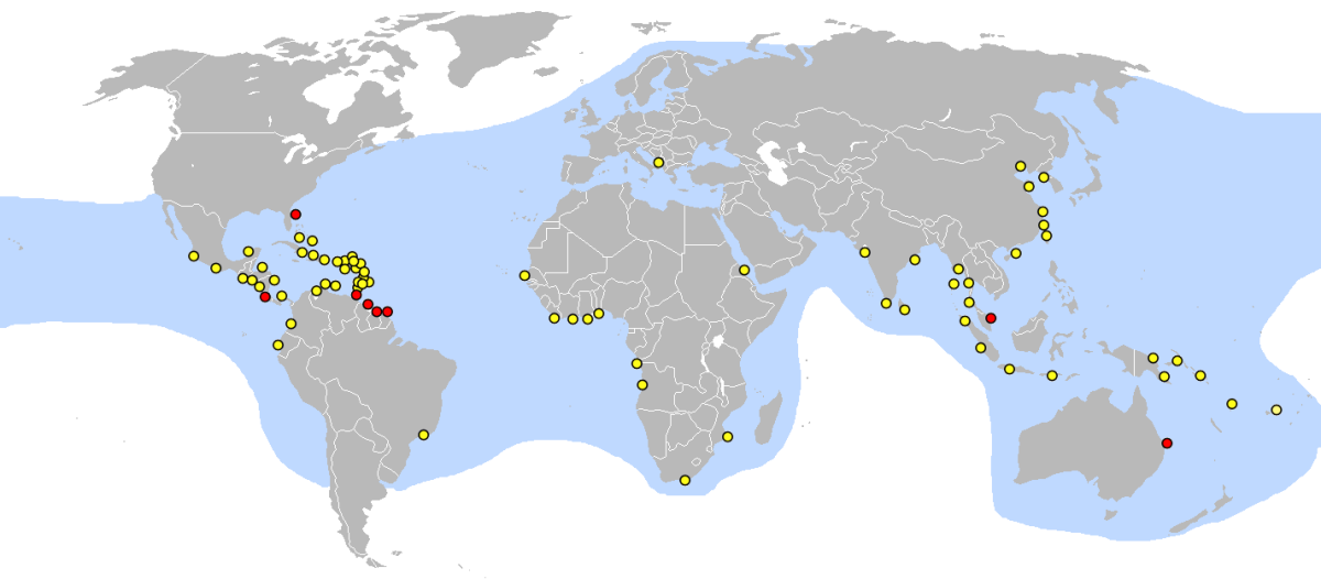 Nesting location of Leatherback sea Turtle : red dot = major nesting locations, yellow dot=minor nesting locations