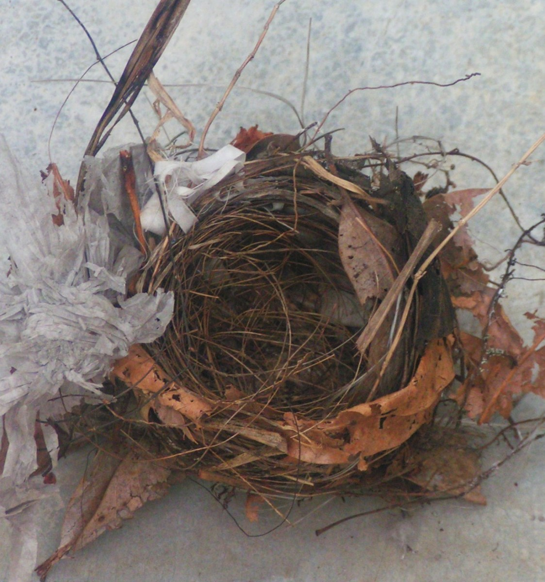 how-to-save-a-fallen-nestling