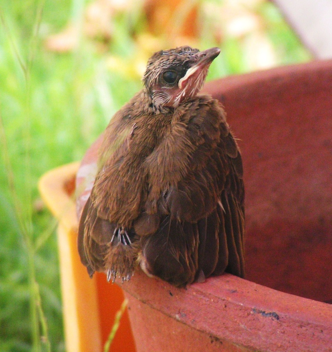 How To Save A Fallen Nestling