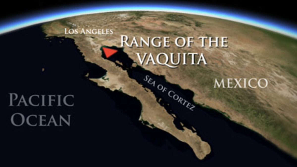 Range of Vaquita