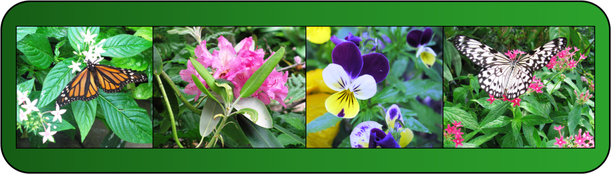 Four related photos of a garden scene become one unified photo collage.