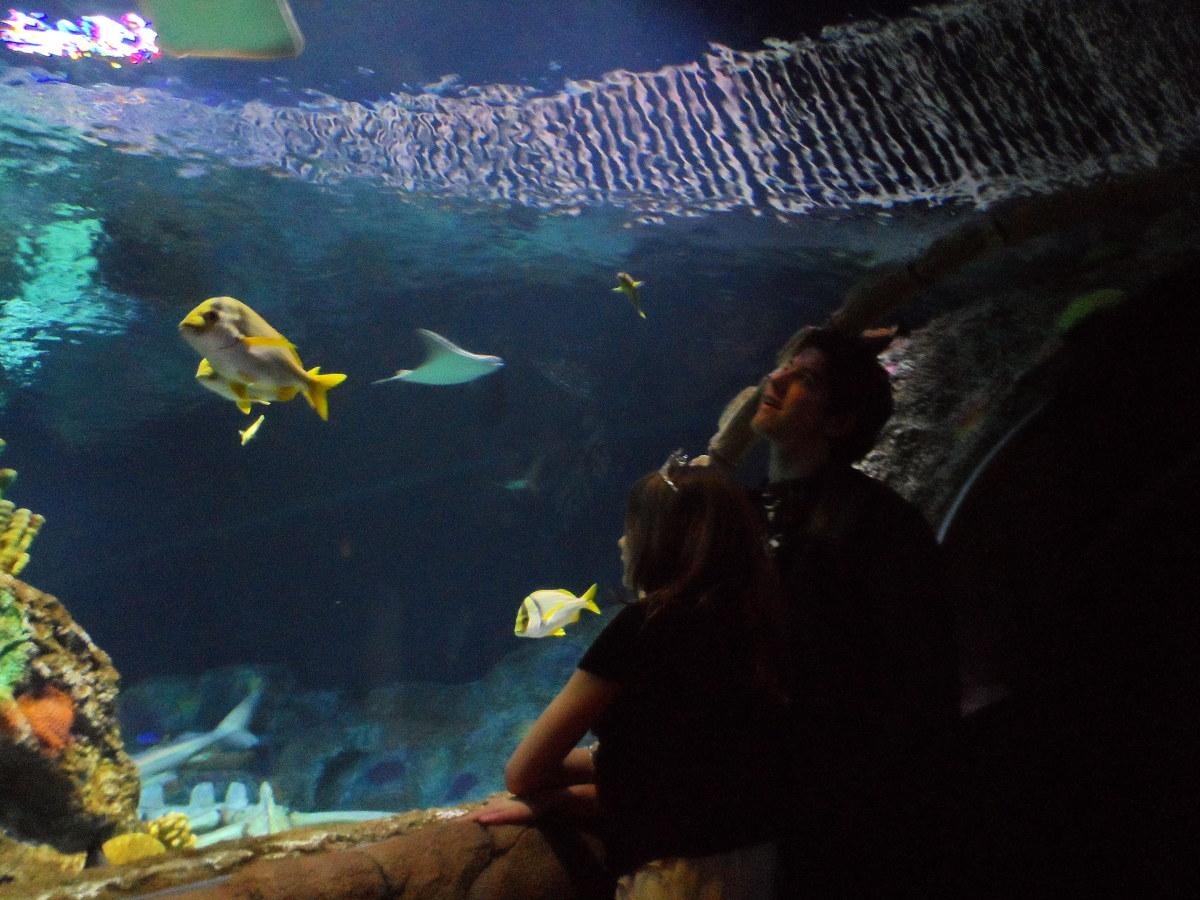 Shark view