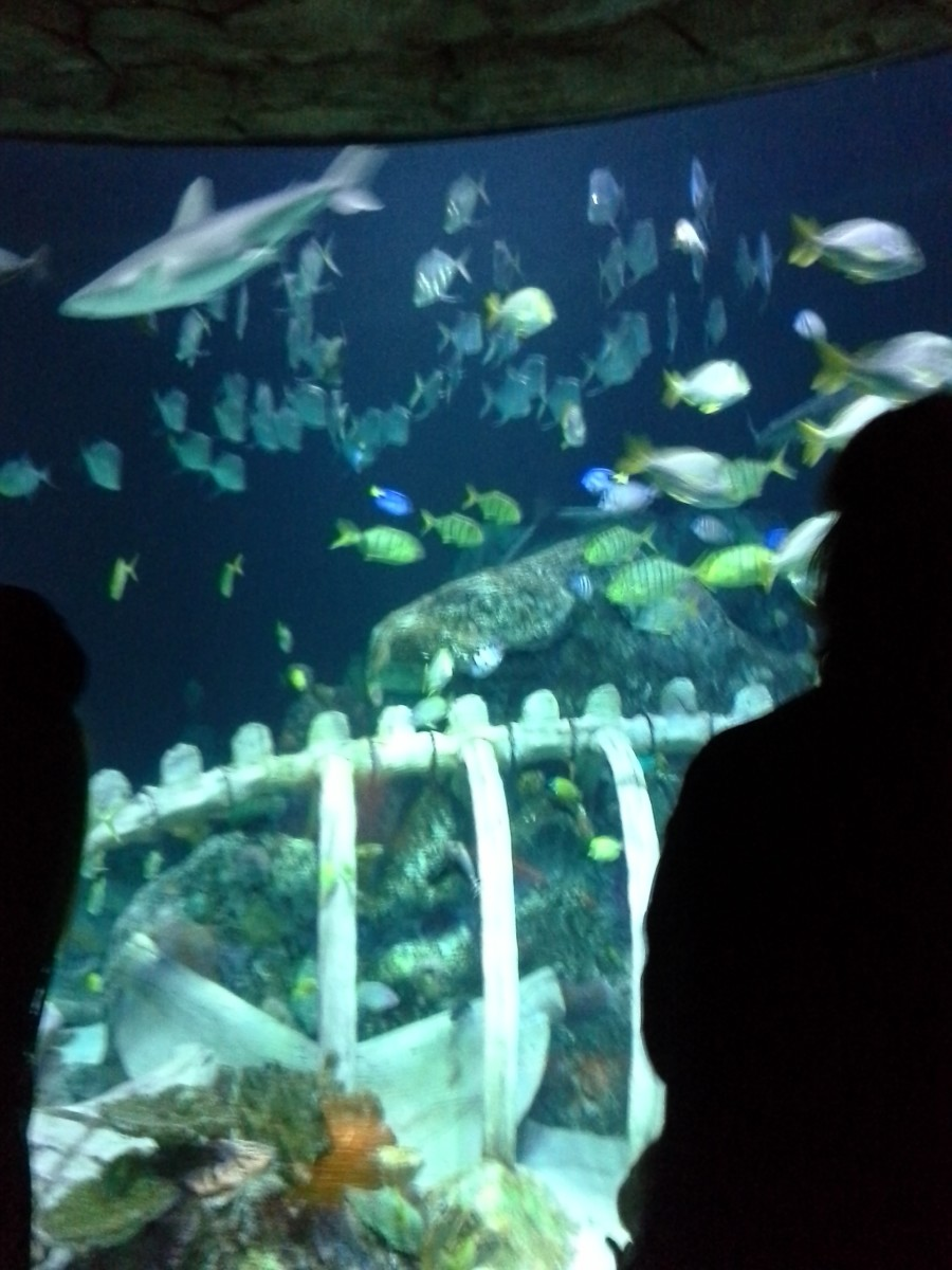 Tunnel view of fish and sharks