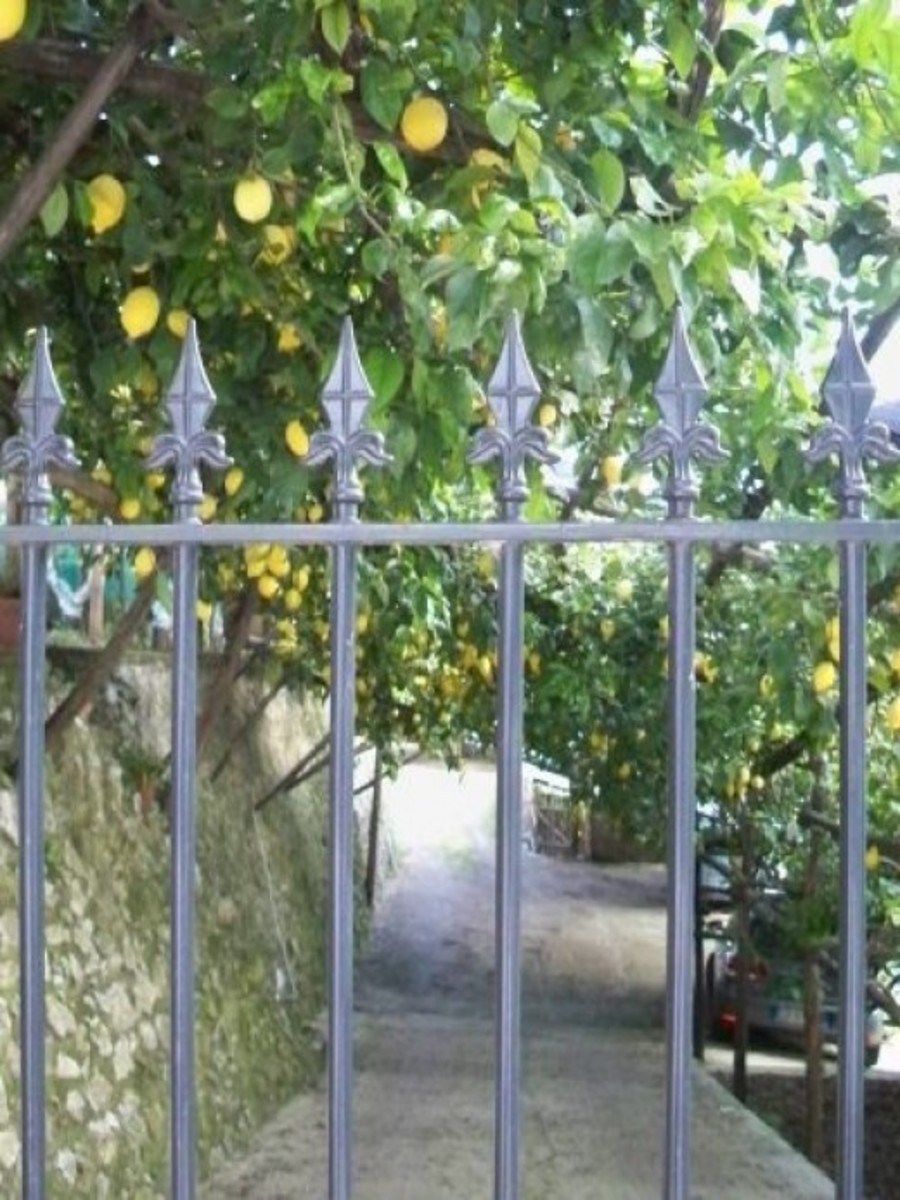Most of the lemon groves are gated. I wanted so much to walk through them.