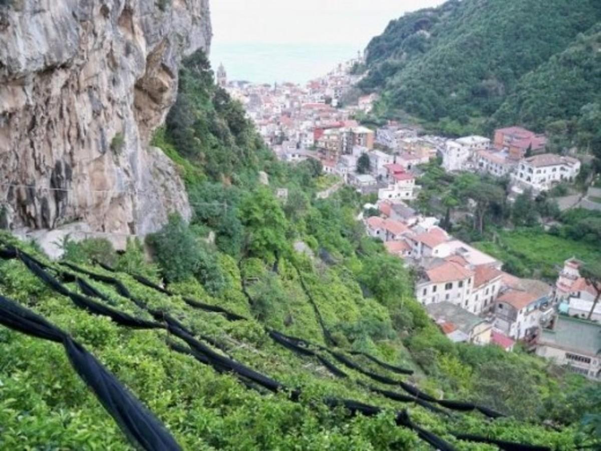 Lemon tree terraces above Amalfi
