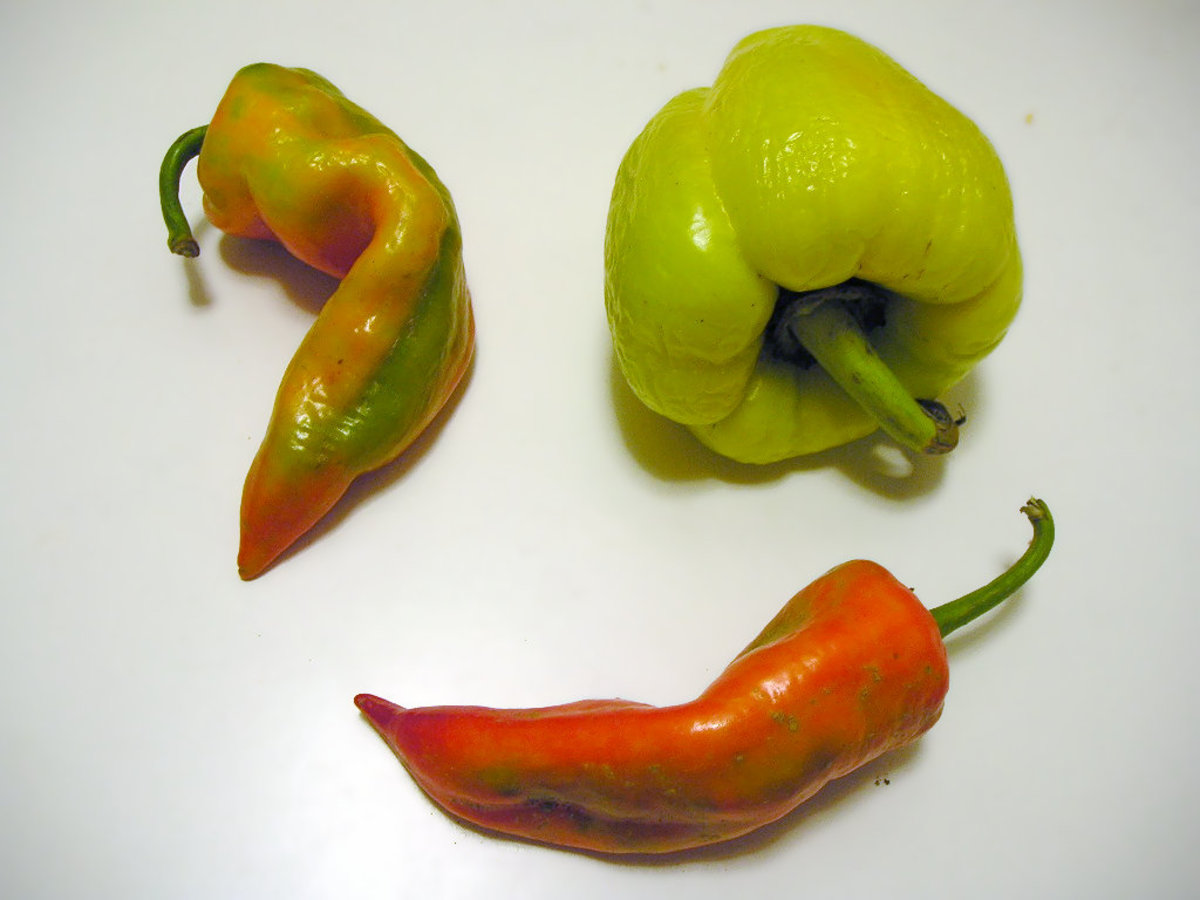More pepper varieties used to make paprika