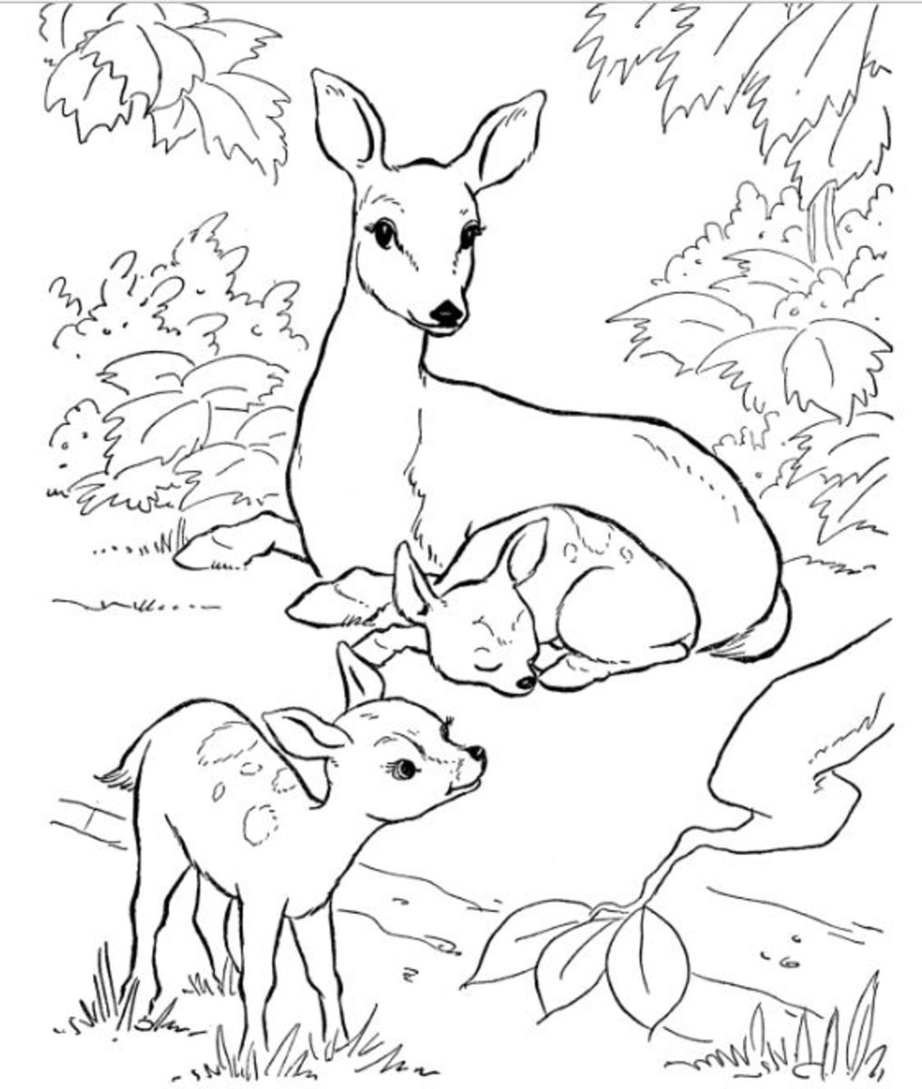 Backyard Animals and Nature Coloring Books Free Coloring ...