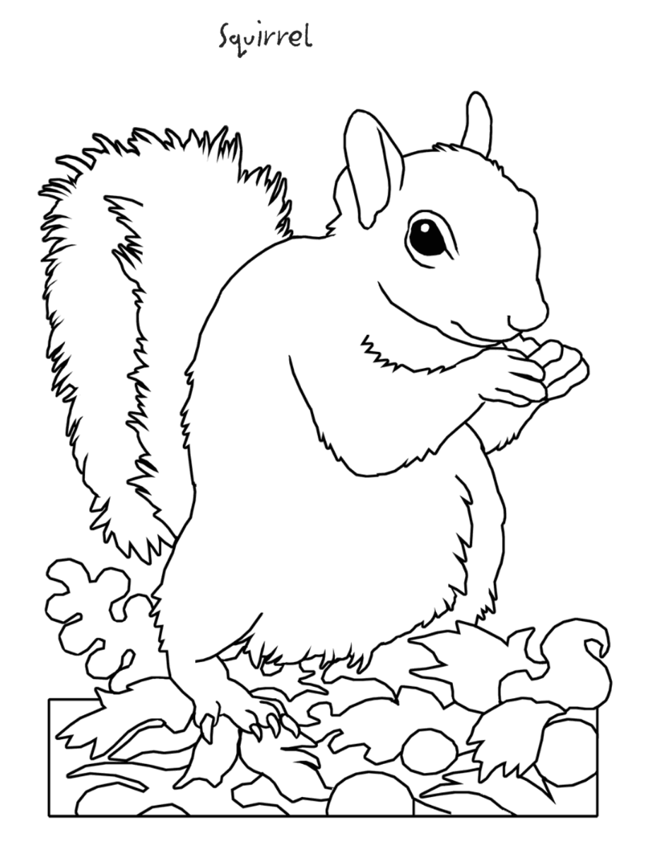 Squirrel Clipart Coloring Page