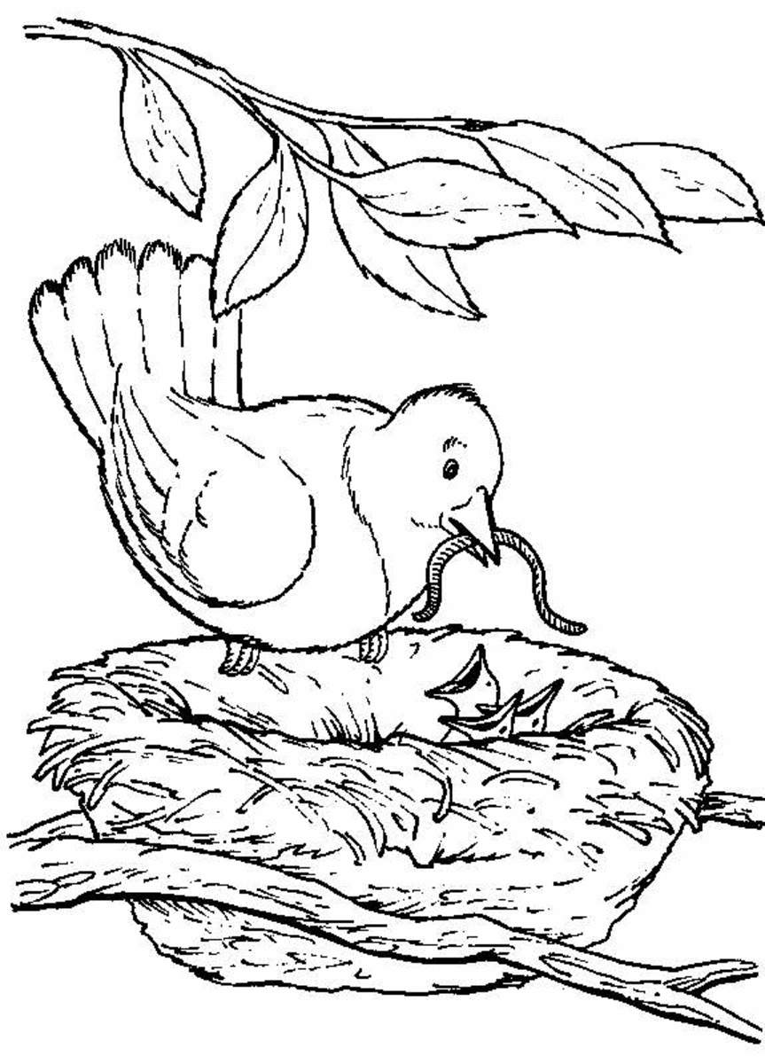 Backyard Animals and Nature Coloring Books Free Coloring Pages ...