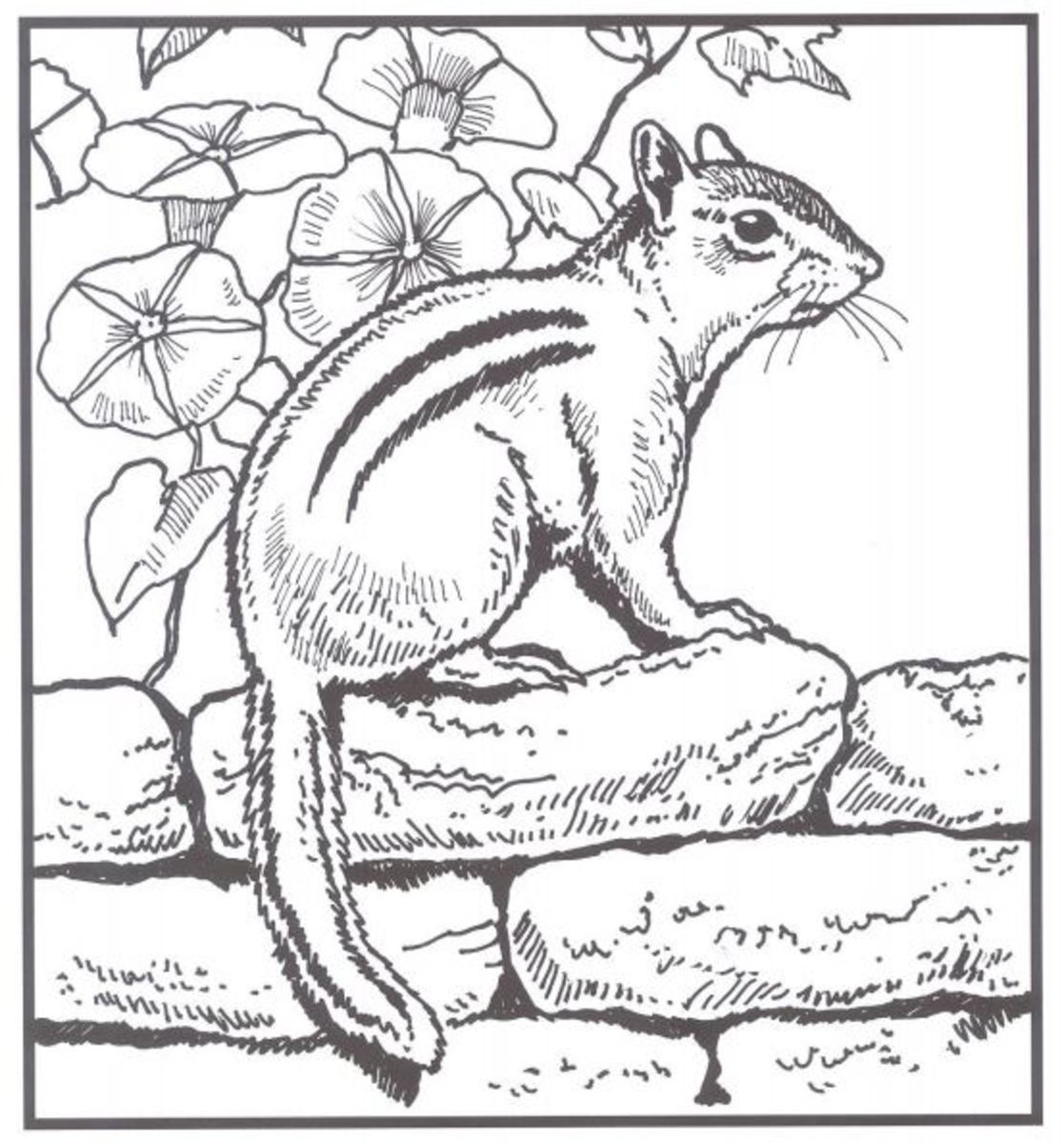 Chipmunk Coloring Page