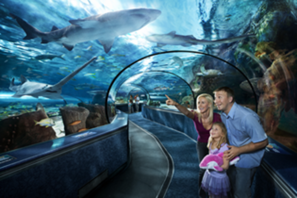 Ripley's Aquarium, Broadway at the Beach