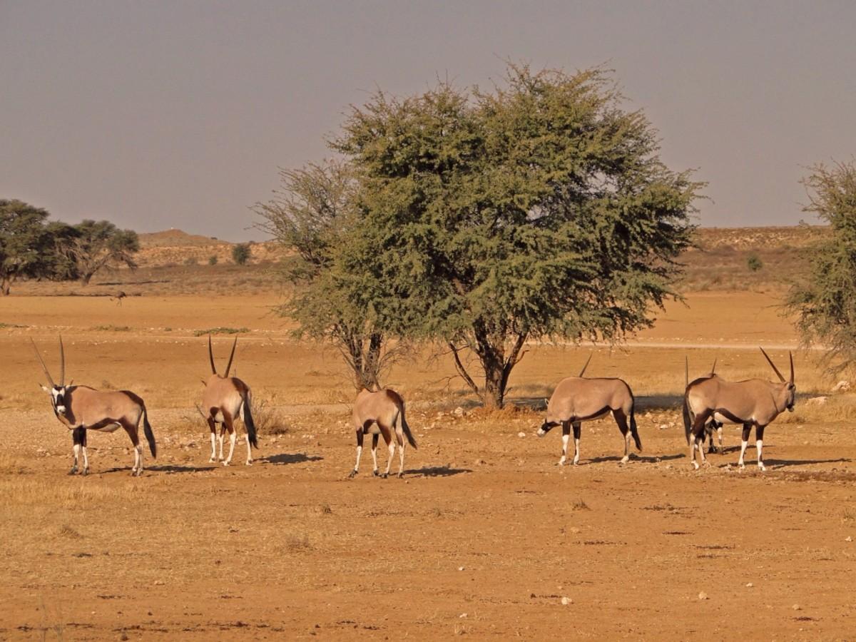 Semi-arid desert in Kalahari