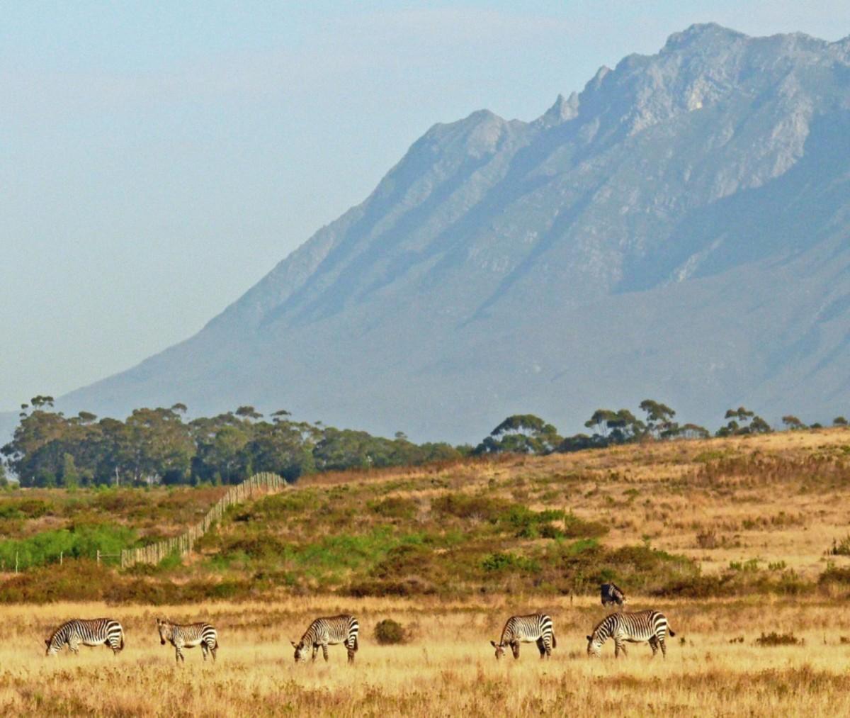 Cape Folded Range from Bontebok National Park
