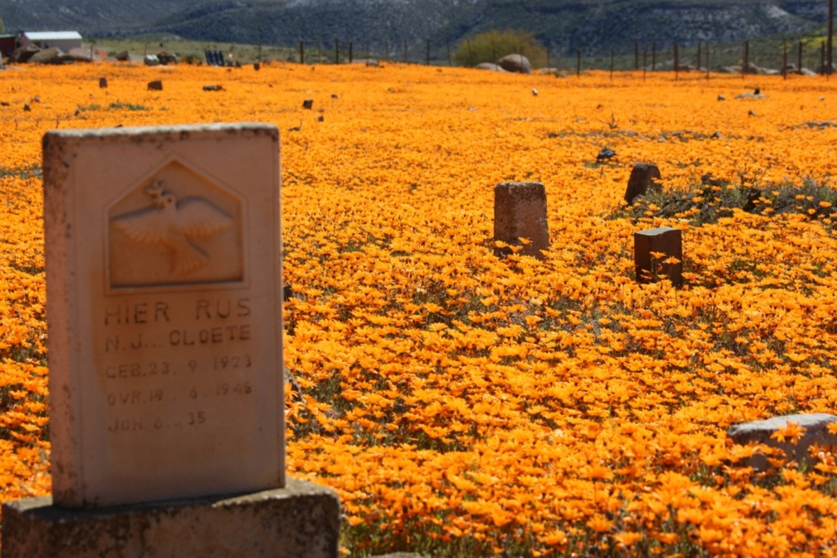 West Coast flowers in Namaqualand