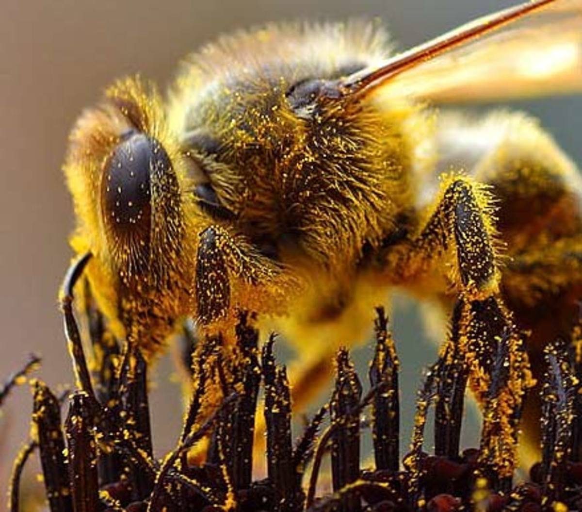 Photographing Bees-One of Nature's Most Valuable Resources