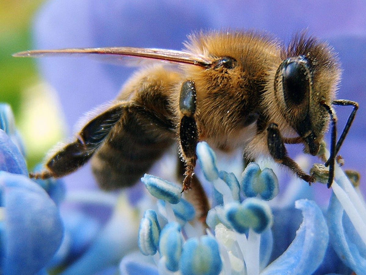 photographing-the-secret-lives-of-bees