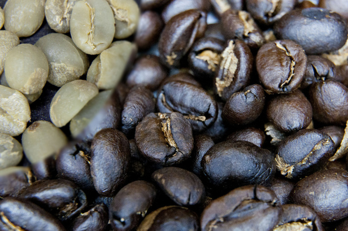 how-to-lose-weight-using-green-coffee-bean-extract